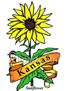 state_flower_kansas_the_sunflower_with_gold_banner_royalty_free_080713-225733-438024
